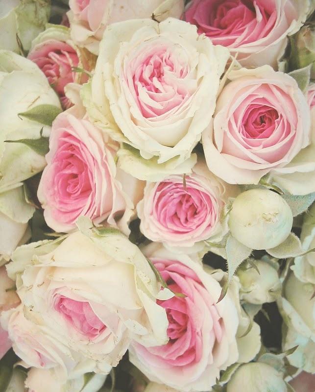 Bunch of roses: White Rose, Shabby Chic, Marie Antoinette, Paris France, Roses, Mary Antoinette, Pink Rose, English Rose, Flowers