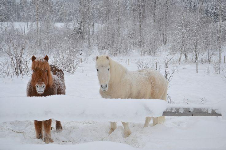 Hester ved Kastadtjernet