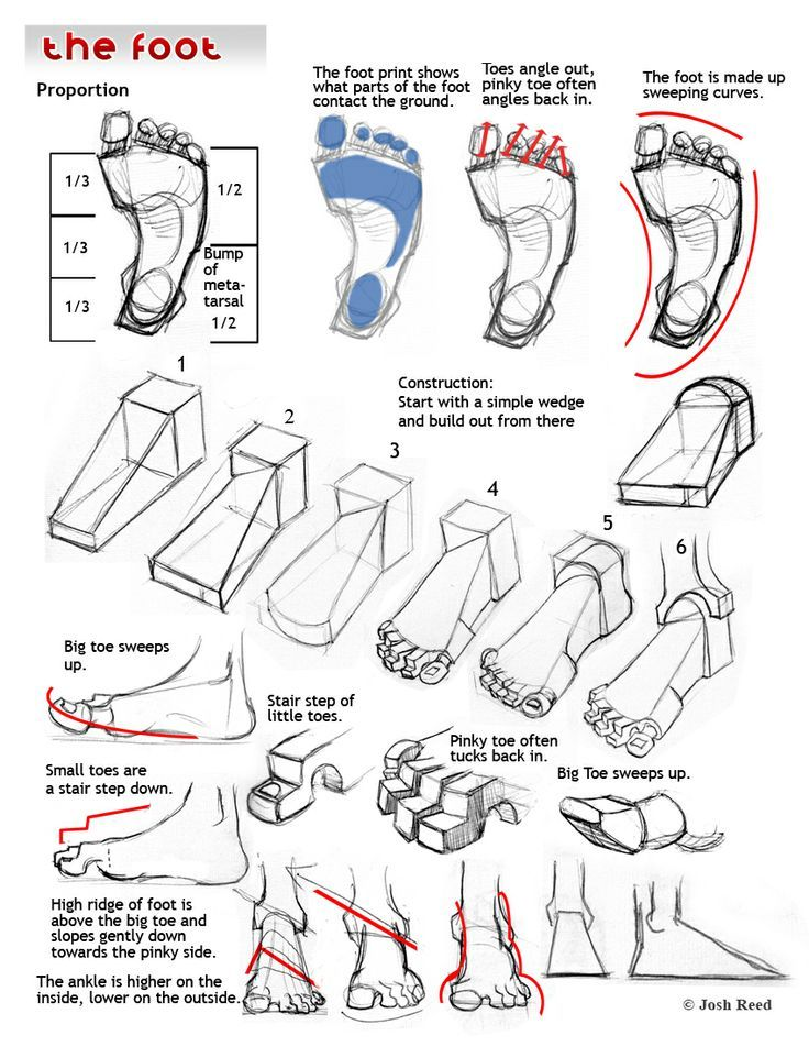30 best Drawing Reference - Anatomy - The Foot images on Pinterest ...