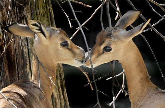 animals kissing | Pictures-Animals-Kissing.jpg