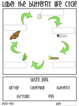 Butterfly Life Cycle Journal and Assessment  Created by: Chelsea Farver