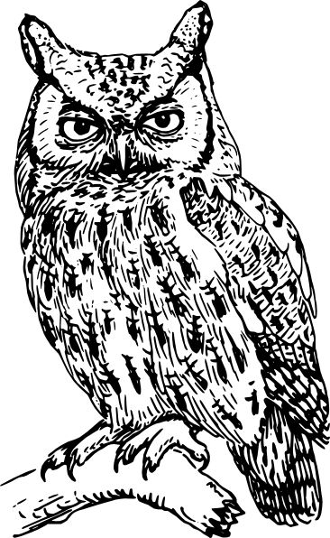 Owl Silhouette Template | Owl Clip Art Black and White