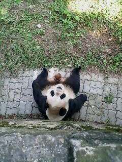 Hongchao Zoo. 虹橋動物園。