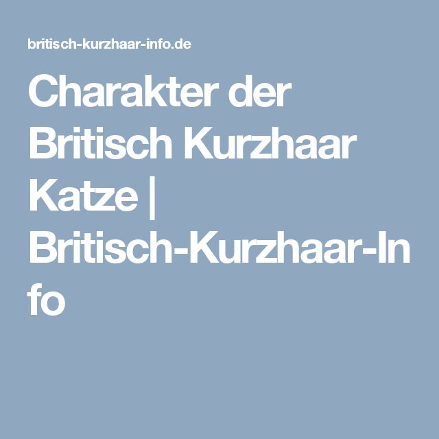 Charakter der Britisch Kurzhaar Katze | Britisch-Kurzhaar-Info