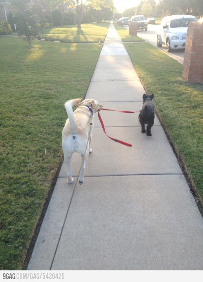 dog walking a dogDogs Walks, Funny Pics, Funny Dogs, Funny Pictures, Pets Photos, Pets Health, Pets Stores, Furries Friends, Dogs Funny