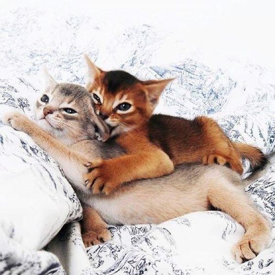 /// play fighting kittens