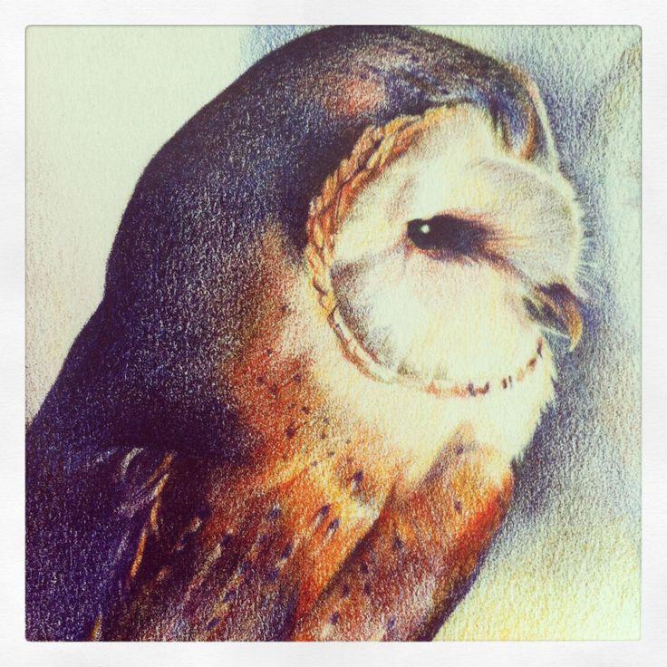 Tekening Kerkuil/Drawing owl
