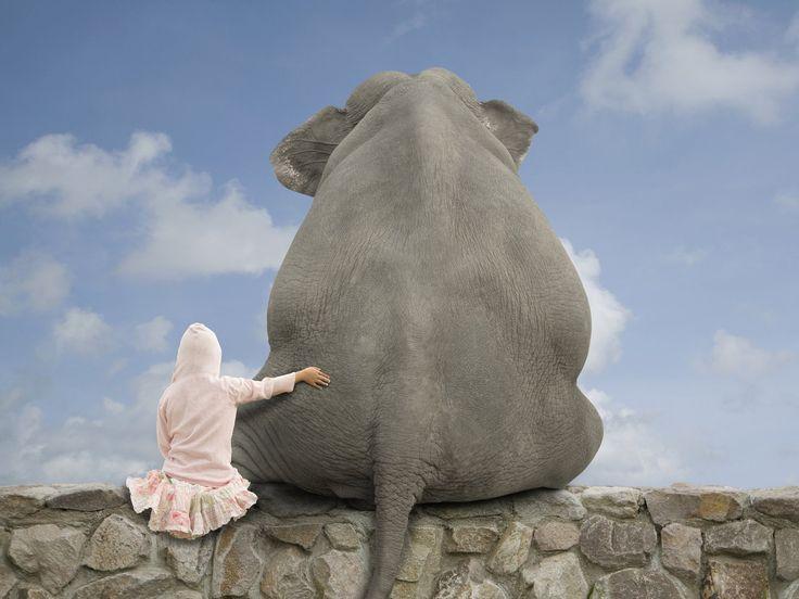 images of elephants   Elephant Wallpaper in HD