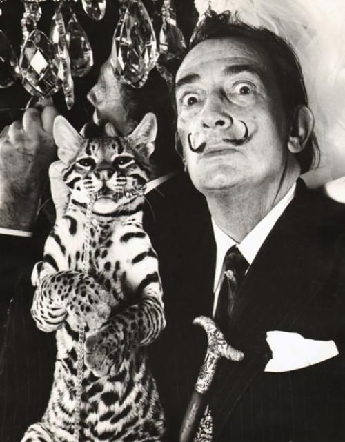 Salvador Dali and ocelot.  Quite a lot to process in this pic.  Would you expect anything else from Dali?
