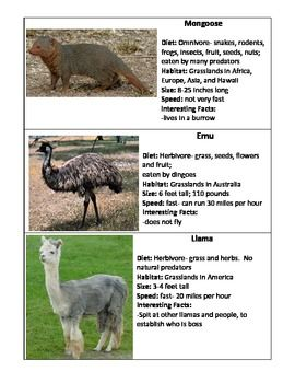 These+cards+include+7+grassland+animals:+llama,+hippo,+dingo,+cape+hunting+dog,+meerkat,+emu,+and+mongoose.++These+cards+contain+the+diet,+habitat,+size,+speed,+and+interesting+facts+for+each+animal.++Great+for+students+to+be+exposed+to+grassland+animals+and+for+them+to+practice+categorizing.+