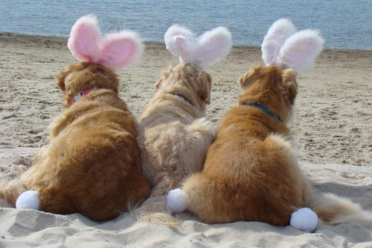 Beach Bunnies Brie,Bentley and Tyler