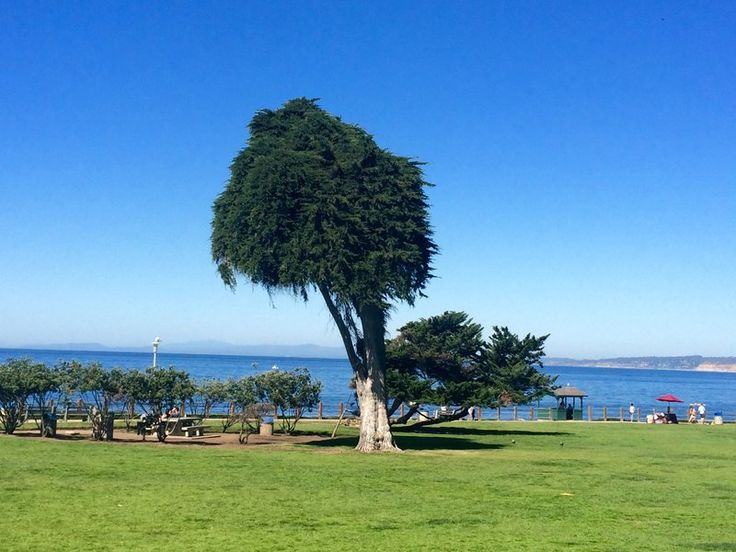 Visit the Original Lorax Tree in Dr. Seuss's San Diego - Check out these Seuss-related sites in Theodore Geisel's adopted hometown