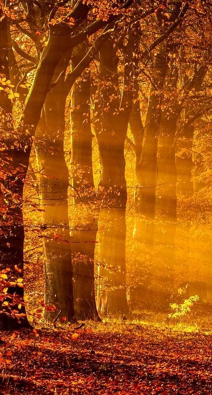 Sun Rays on an autumn morning