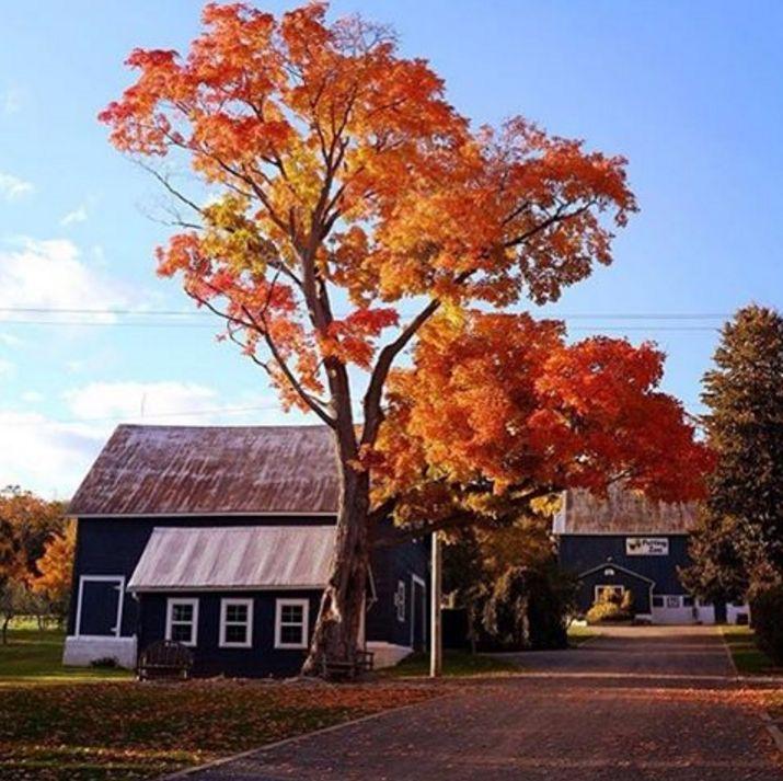 Waupoos Estates Winery (Prince Edward County, Ontario). #travel #tourism #winery