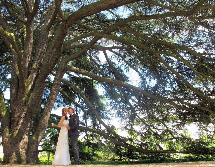 """Über 1.000 Ideen zu """"Hochzeitsbaum auf Pinterest  Hochzeitsbaum ..."""