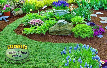 Lawn substitute: Thymus serpyllum Elfin Thyme. Tolerates heat, drought, and heavy foot traffic!