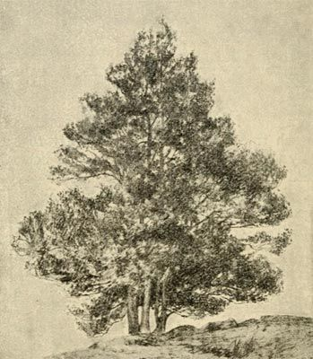 16 best art sketchbook concentration trees images on pinterest the artistic anatomy of trees by rex vicat cole a detailed art guide showing how to draw and paint advanced landscapes featuring trees fandeluxe Gallery