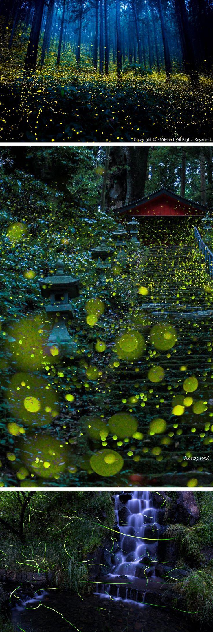 Magical Photographs of Fireflies from Japan's 2016 Summer