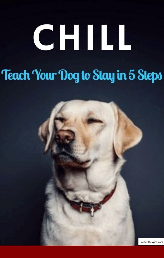 Training Tips For Dachshund Puppies And Pics Of Train Your Dog Not