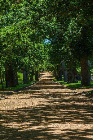 Historical Mile Groot Constantia