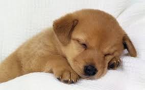 Resultado de imagen de cachorros de perros tiernos                              …