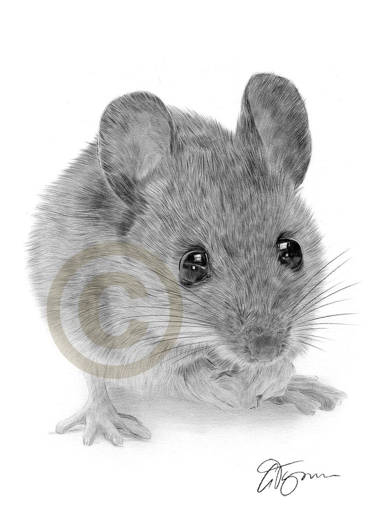 358 best images about A Mouse in my House on Pinterest ...