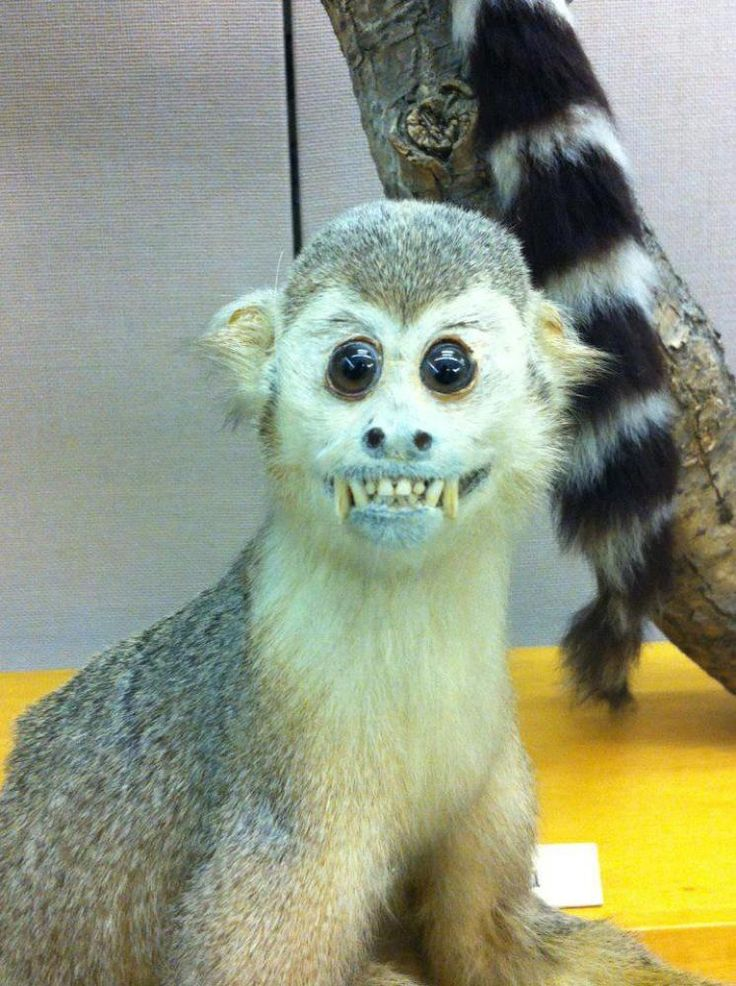 Hilariously Bad Taxidermy Celebrated On Facebook, Where 'Badly Stuffed Animals' Are Stars (PHOTOS)