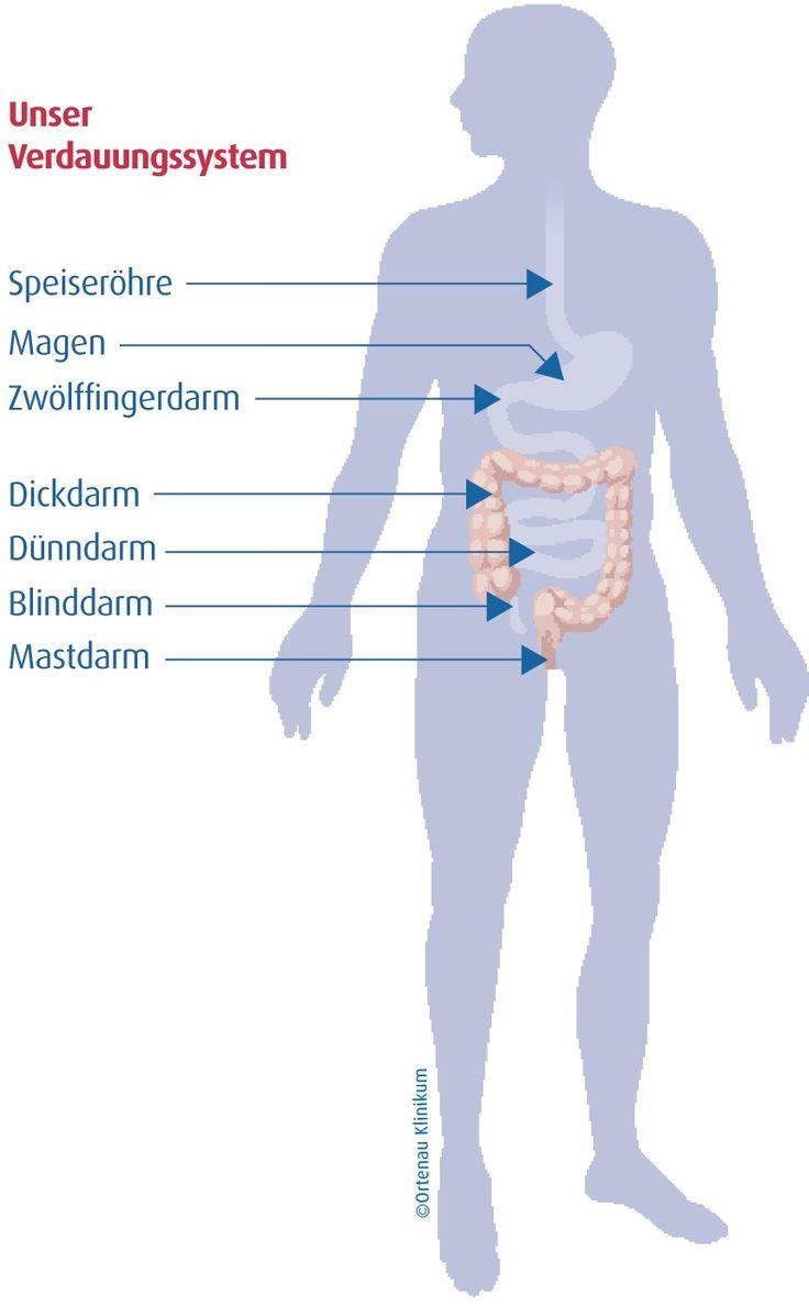 Als Verdauung bezeichnet man den Aufschluss der Nahrung im Verdauungstrakt mit Hilfe von Verdauungsenzymen. Dabei entstehen durch Hydrolyse aus hochmolekularen Kohlenhydraten, Fetten und Eiweißen niedermolekulare Verbindungen (z. B. Mono- und Disaccharide, Fettsäuren, Aminosäuren, Di- und Tripeptide), die zum Teil in Energie umgewandelt und bei der Produktion von neuer Körpersubstanz eingesetzt werden. (Quelle: Ortenau Klinikum)