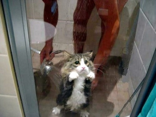 I know I've shown this pic before, but I've never seen a cat look so sad in my life. Hilarious!
