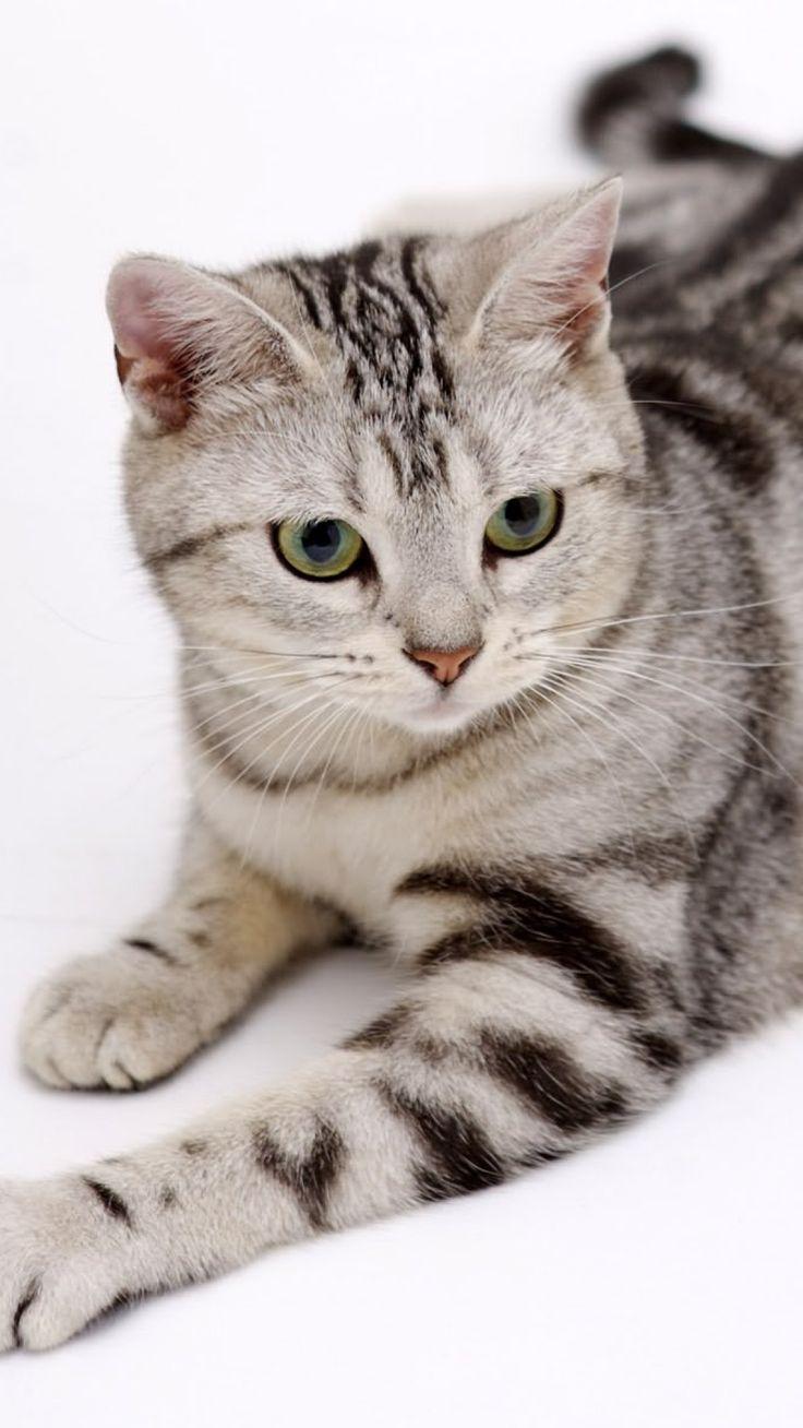 821 best cat pics images on Pinterest