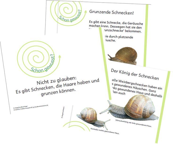 41 best schnecke images on pinterest snails kindergarten center signs and elementary schools. Black Bedroom Furniture Sets. Home Design Ideas