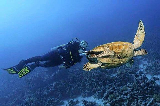Har du drömt om att upptäcka världen under vattnet? Men inte lärt dig dyka än.  Vinterns och vårens kursschema finns nu uppe på hemsidan. Boka in din grundkurs redan idag!  #scuba#diving#divecourse#openwater#adventure#dyka#dykning#dykkurs#dykcert#upplevelse#scubapro#divessi#flysas#tui#apollo#ving#ocean#stockholmsdykcenter#stockholm#sweden