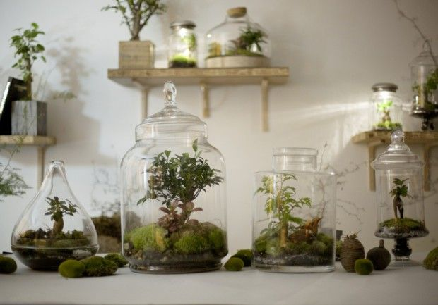 DIY: our manual terrarium