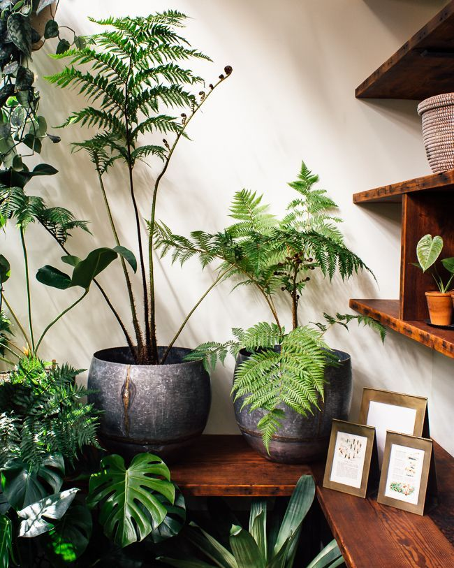 We're pretty much obsessed with tree ferns...