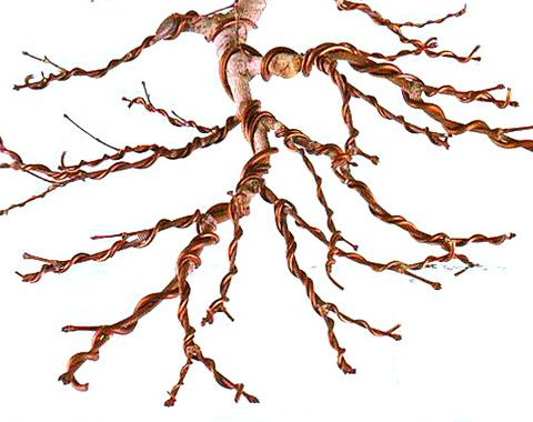 Learn How To Wire Your Bonsai Tree: Part 2 – Nursery Tree Wholesalers