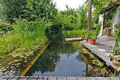 Kurz vor dem Frühstück noch ein Sprung in den Schwimmteich. Noch näher am Haus geht wirklich nicht mehr. (Schwimmteich Teich Naturgarten Naturschwimmteich nature garden swimming pond)