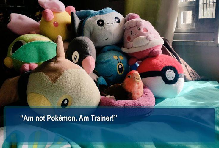 pokemon pokeball pokemon toys pokemon stuff