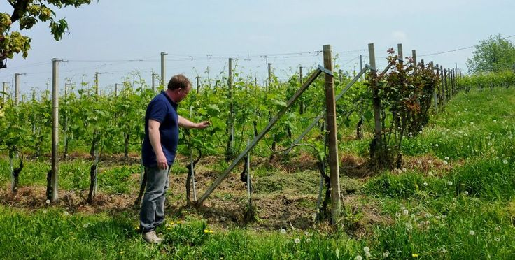 Valerio Mossio in his vineyards in the Langhe