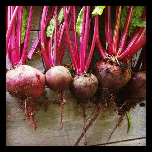 Little beetroots, fresh from the cottage garden.