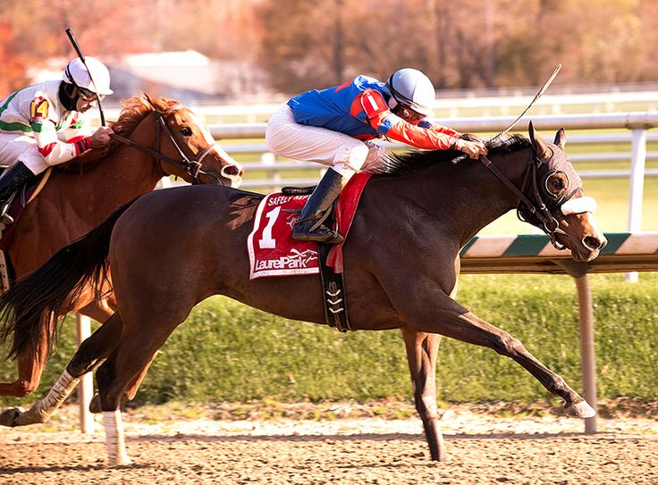Who's In Town(2011)(Filly) Speightstown- Who's Cozy By Cozzene. 4(C)x5(C) To Secretariat, 5(C)x5(C) To Bold Ruler, 5x5 To Northern Dancer & Buckpasser. 13 Starts 4 Wins 2 Seconds 2 Thirds. $211,022. Won 7F Safely Kept S, 2nd 6F Miss Woodford S, 3rd 6F Smart Halo S.