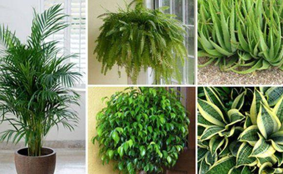 piante dormire meglio