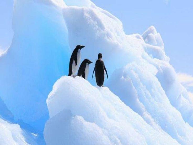 La Antártida es fría y seca, pero el calentamiento podría traer lluvias o derretimiento temprano de la nieve, y así desaparecer los pingüinos