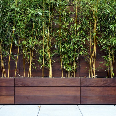 Privacy Screen Bamboo in Planters Exterior Photos Planter Design Ideas, Pictures, Remodel, and Decor