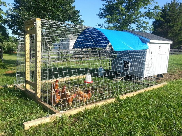 portable chicken enclosure