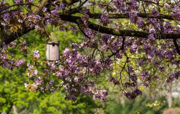 Обои картинки фото дерево, весна, цветение, сакура
