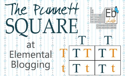 The Punnett Square is a foundational genetic principle. In today's post, I wanted to provide you with the tools to introduce this concept to your students.