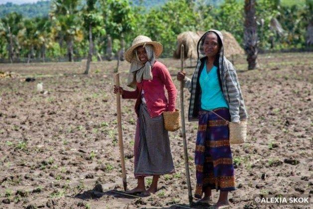 La Caja de Pandora: Trabajo femenino pasa desapercibido en Timor Orien...