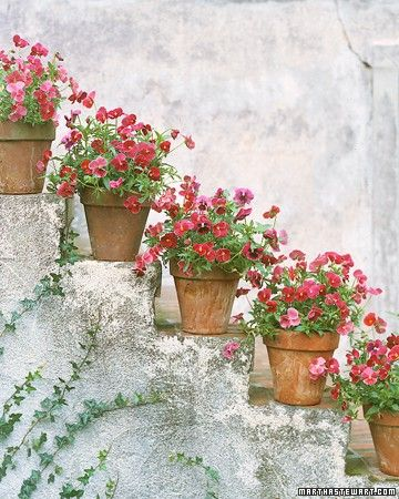 ..: Plants Can, Stones Step, Pink Flowers, Terracotta Can, Flowers Pots, Outdoor Stairs, Clay Pots,  Flowerpot, Front Step