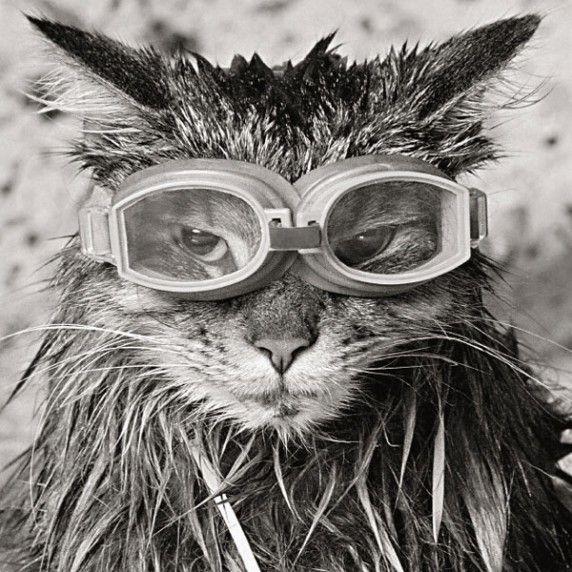 Goggles!~♛