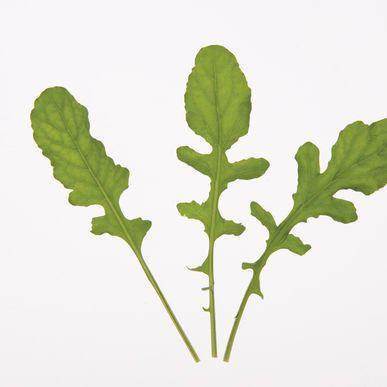Arugula ORGANIC Seeds (Eruca sativa) + FREE Bonus 6 Variety Seed Pack - a $30 Value!